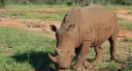 What an encounter with rhinoceros taught me about followership